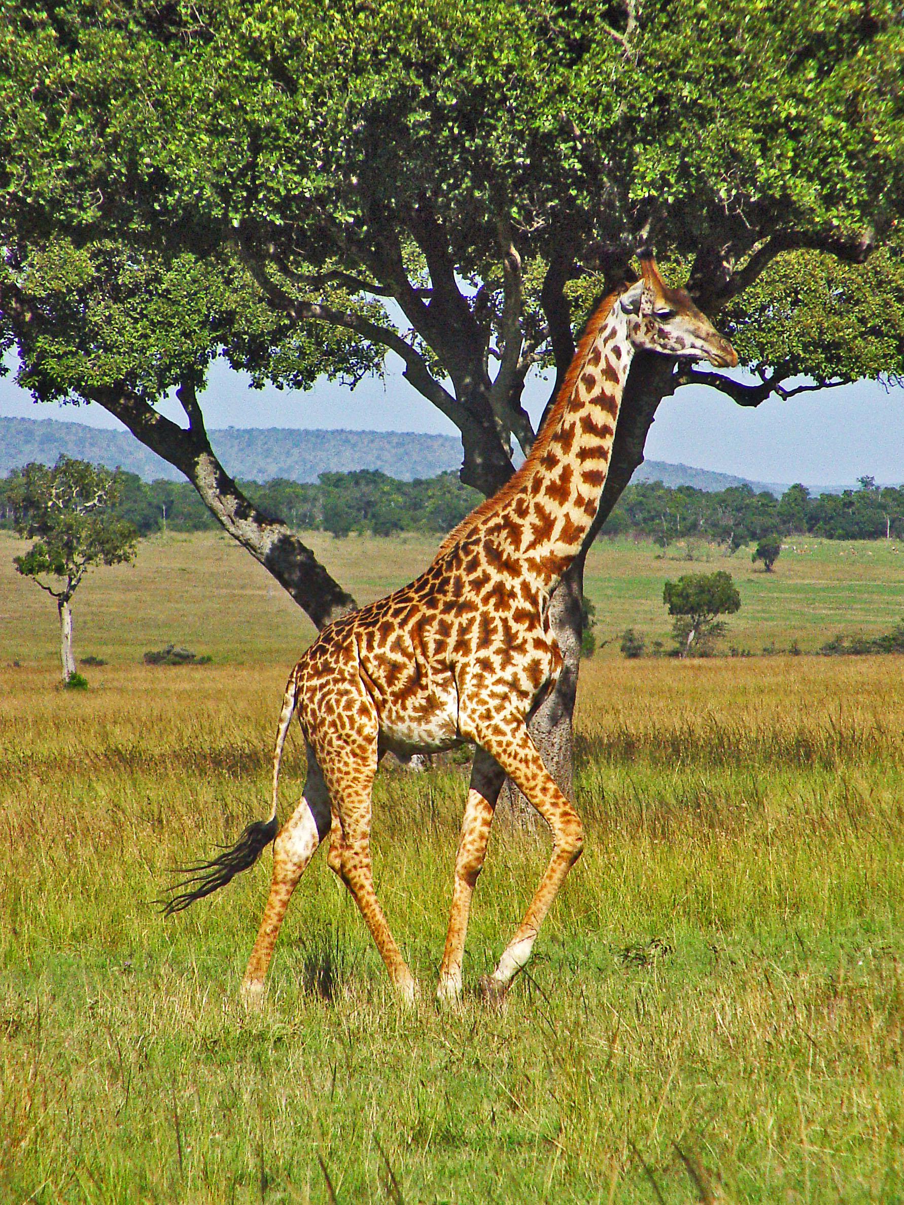 Giraffe Academy - steps towards teacher professionalism